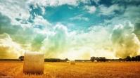 Autumn-sunny-field-original (1024x576)