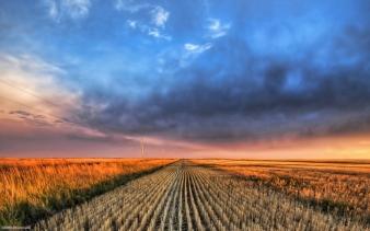 Cutting-the-wheat-original (1024x640)